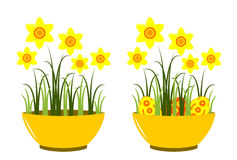 Daffodils in bowl Royalty Free Stock Photo