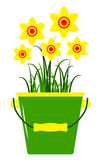 Daffodils in bucket Stock Images