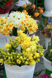 Daffodils. In bucket sell in flower shop Royalty Free Stock Image
