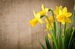 Daffodils on burlap Stock Photo