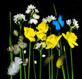 Daffodils and butterflies Royalty Free Stock Images