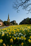 Daffodils and church Royalty Free Stock Photos