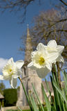 Daffodils and Church at Lower Slaughter Royalty Free Stock Image