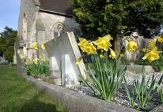 Daffodils in cimitero Fotografia Stock
