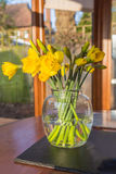 Daffodils in a clear glass vase Royalty Free Stock Photo