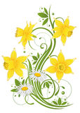 Daffodils, daisy, easter Royalty Free Stock Images