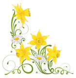 Daffodils, daisy, easter Stock Photography