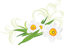 Daffodils with decorative sprigs Royalty Free Stock Photo
