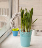 Daffodils   and decorative watering cans and buckets on the balc Stock Photography