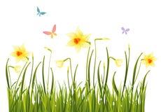 Daffodils della sorgente Immagini Stock