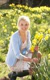 Daffodils della sorgente di raccolto della giovane donna Fotografia Stock