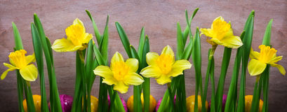 Daffodils, easter eggs Stock Image