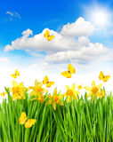 Daffodils easter flowers green grass. Spring landscape Royalty Free Stock Photos