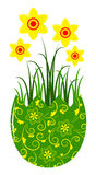 Daffodils in egg pot Royalty Free Stock Photo