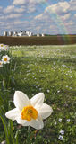 Daffodils and farm Royalty Free Stock Photography