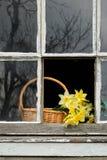 Daffodils in finestra Fotografia Stock Libera da Diritti