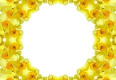 daffodils floral πλαίσιο Στοκ Φωτογραφίες