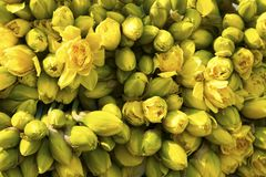 Daffodils on the flower market in Amsterdam for sale Royalty Free Stock Image