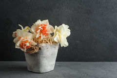 Daffodils in flower pot on dark concrete background Royalty Free Stock Photos