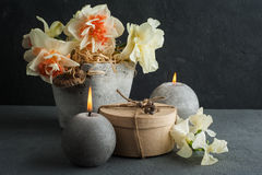 Daffodils in flower pot on dark concrete background Stock Photos