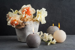 Daffodils in flower pot on dark concrete background Stock Photography