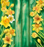 Daffodils flowers on the wooden background Royalty Free Stock Photos