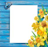 Daffodils flowers on the wooden background Stock Photo