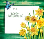 Daffodils flowers on the wooden background Royalty Free Stock Photography