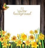 Daffodils flowers on the wooden background Royalty Free Stock Image
