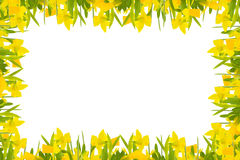 Daffodils frame Royalty Free Stock Photography