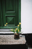 Daffodils in front of a house in Denmark Royalty Free Stock Photo
