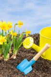 Daffodils with garden tools Stock Photography