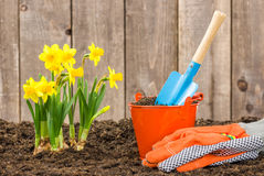 Daffodils and Garden Tools Stock Images