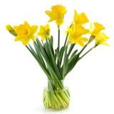 Daffodils gialli Fotografia Stock
