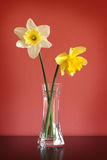 Daffodils in glass vase Royalty Free Stock Photos
