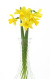 Daffodils in a glass vase Stock Photo