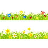 Daffodils in grass. Daffodil and ladybugs on a grass background with flowers Royalty Free Stock Photos