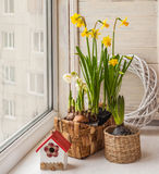 Daffodils and hyacinths in baskets Royalty Free Stock Images