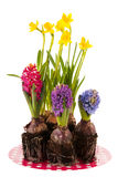 Daffodils and hyacinths on plate Stock Photo