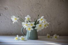 Daffodils in jug on grunge  white background Royalty Free Stock Images