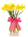 daffodils kolor żółty odosobniony wazowy Zdjęcie Royalty Free