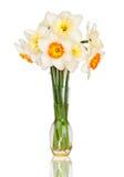 daffodils kolor żółty wazowy biały obraz royalty free