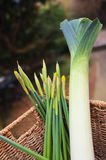 Daffodils and Leeks Royalty Free Stock Photography