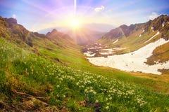 Daffodils Marmarosh Stock Photos
