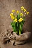 Daffodils na burlap Obraz Royalty Free