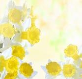 Daffodils na jaskrawym abstrakcjonistycznym tle Ilustracja Wektor