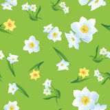 Daffodils na zieleni Background-01 Obrazy Royalty Free