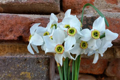 Daffodils near fortress wall. A bouquet of daffodils near the old fortress wall Stock Photos