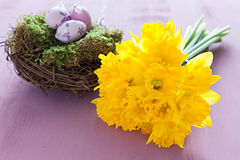 Daffodils and nest Stock Photos