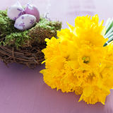 Daffodils and nest Stock Images